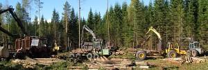 skogensveteraner_9695