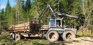 skogensveteraner_9724