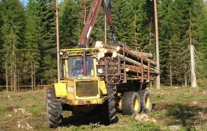 skogensveteraner_9775