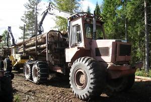 skogensveteraner_9784